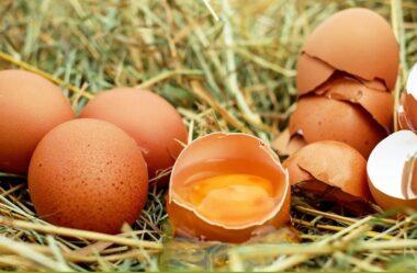 Os benefícios da clara de ovo no cabelo