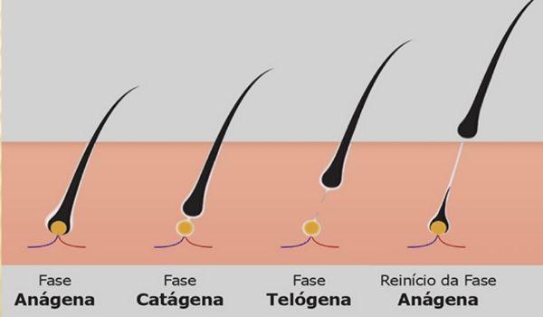 ciclo de vida do cabelo